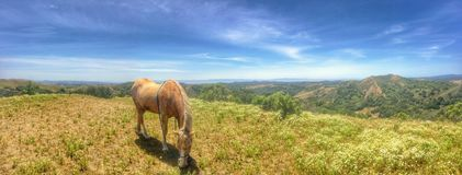 Animals: Palomino horse in the hills Royalty Free Stock Photos