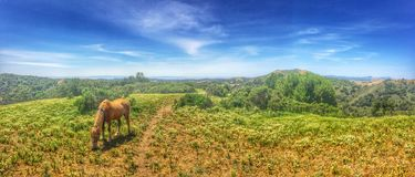 Animals: Palomino horse in the hills Stock Image
