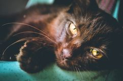 Slave cat royalty free stock image