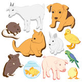 Animals pets vector colorful icons set. Illustrations of various domestic animals - dog, cat, parrot, fish, pig, bunny and other Stock Photography
