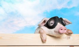 Animals. Pig piglet head  tree snout Stock Image