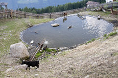 Animals by pond in Alps Stock Photo