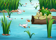 Animals and pond. Illustration of many animals in a pond Stock Photo