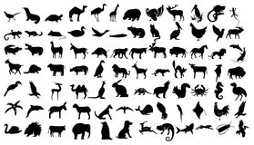 Animals related icon set Royalty Free Stock Photography