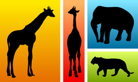 Animals from safari / zoo royalty free illustration