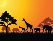 Animals in the savanna Stock Image