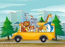 Animals on school bus Stock Images