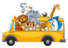 Animals on school bus Stock Image