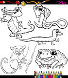 Animals set cartoon coloring book Royalty Free Stock Image