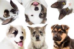 Animals set Stock Photos