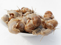 Animals shell. Group of snails moving in a container stock photo