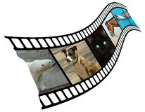 Animals are in a shot. Royalty Free Stock Photos