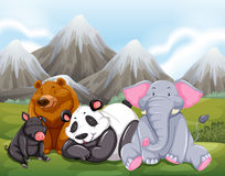 Animals. Sitting on grass with mountain view behind Royalty Free Stock Photo