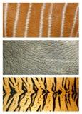 Animals skin Royalty Free Stock Photography