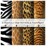 Animals Skin Pattern and Footprint Royalty Free Stock Photography