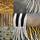 Animals skin Royalty Free Stock Photos