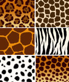 Animals skins textures vector illustration