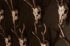 Animals skulls Royalty Free Stock Images