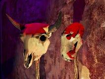 Animals skulls Stock Images