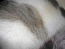 Fur. Animals soft hair fur close up photo Stock Photo