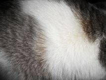 Fur. Animals soft hair fur close up photo Stock Photos