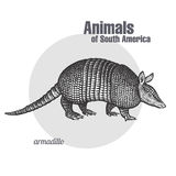 Animals of South America Armadillo. Armadillo hand drawing. Animals of South America series. Vintage engraving style. Vector illustration art. Black and white Royalty Free Stock Images