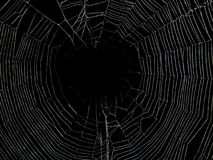 Animals - Spider and Web. Spider sits in the middle of its web with an insect wrapped in a cocoon royalty free stock image