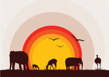 Animal wild life. A  illustration of animal silhouettes during sunset Royalty Free Stock Photos