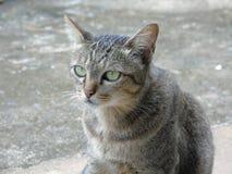Animals thai cat. And sad stock image
