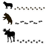Animals and their tracks Stock Image