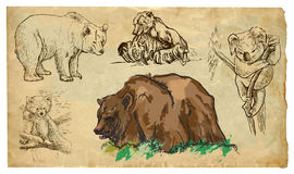 Animals, theme: BEARS - hand drawn vector pack Stock Photo