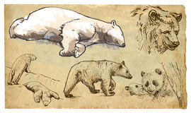 Animals, theme: BEARS - hand drawn vector pack. BEARS (Ursidae family). Collection of an hand drawn illustrations (originals, no tracing). Drawings are editable Stock Image