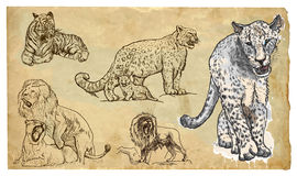 Animals, theme: BIG CATS - hand drawn vector pack Stock Photos