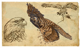 Animals, theme: BIRDS OF PREY - hand drawn vector pack Stock Images