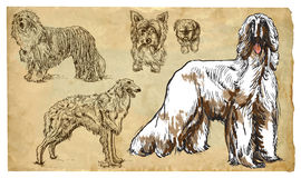 Animals, theme: DOGS (as a national treasure) - vector pack. DOGS (as a national treasure). Collection of an hand drawn illustrations (originals, no tracing) stock illustration
