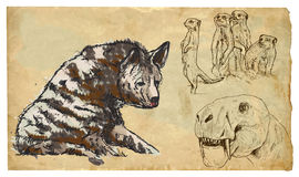 Animals, theme: FELIFORMIA - an hand drawn vector pack Stock Photo