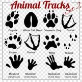 Animals Tracks - vector set Stock Photos