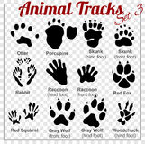 Animals Tracks - vector set Stock Images