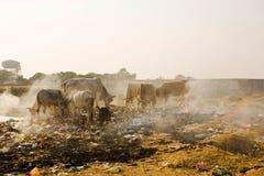 Animals in Trash Stock Image