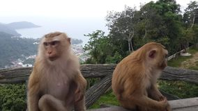Animals. Two cute monkeys observing the crowd Stock Photography