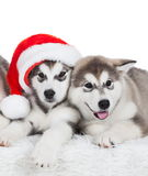 Animals. Two puppy Husky white , Christmas hat. Wonderful two dog puppy Husky, has red Christmas hat. New Year holiday card. Little Santa Claus. Winter snow Royalty Free Stock Photography