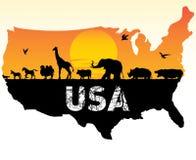 Animals of USA Royalty Free Stock Photo