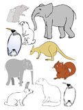 animals various Στοκ Φωτογραφία