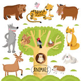 Animals vector set. Vector cartoon animals set. Wild forest animals include tiger, wolf, fox, bear and many other Stock Photos
