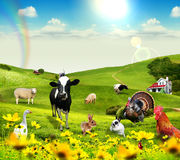 Animals in village. Image for adventure. collage. create in Adobe Photoshop CS3 Royalty Free Stock Photos