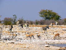 Animals at waterhole Stock Photo