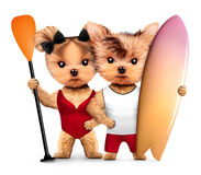 Animals wearing swimwear hold surf and paddle Royalty Free Stock Photography