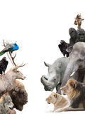 Animals. On a white background Stock Photography