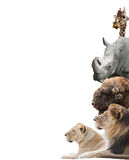 Animals. On a white background isolated Stock Photography
