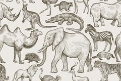 Seamless pattern with animals. Animals of wild world seamless pattern. African animals on a white background. Vintage. Vector illustration art Royalty Free Stock Photo